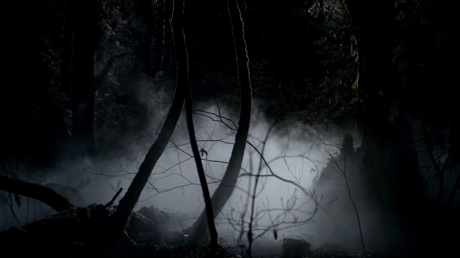 Mystic Falls Wallpaper Woods The Vampire Diaries Wiki Fandom Powered By Wikia