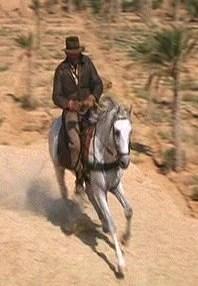 Horse  Indiana Jones Wiki  Fandom powered by Wikia