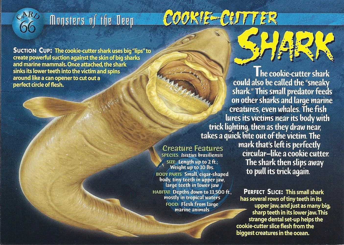 CookieCutter Shark  Wierd Nwild Creatures Wiki  FANDOM powered by Wikia
