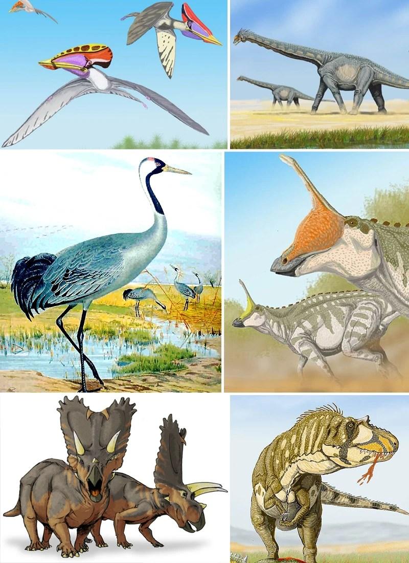 Archosaur  All Birds Wiki  Fandom powered by Wikia