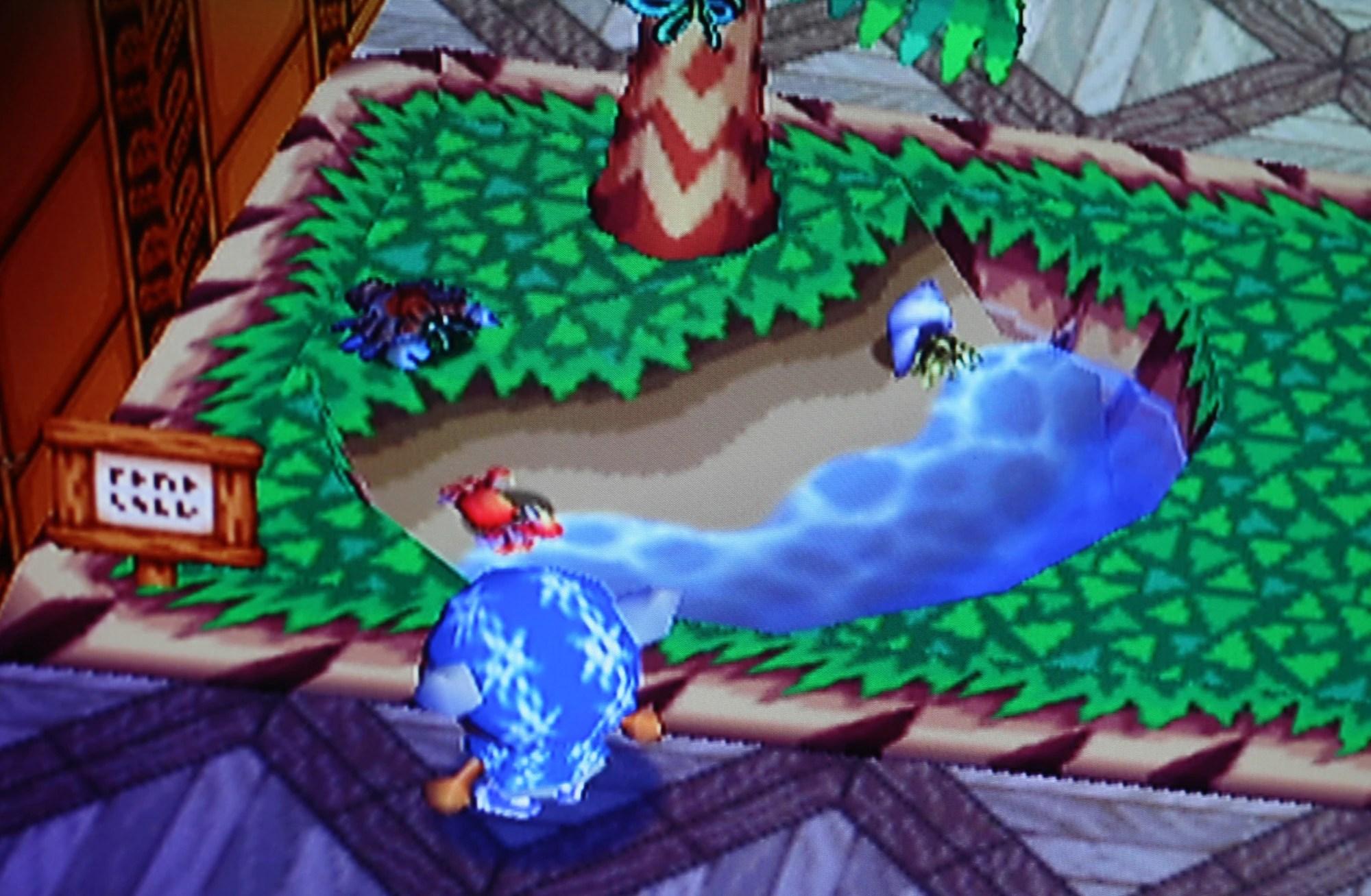 Birdwing Butterfly Animal Crossing Wiki Fandom Powered