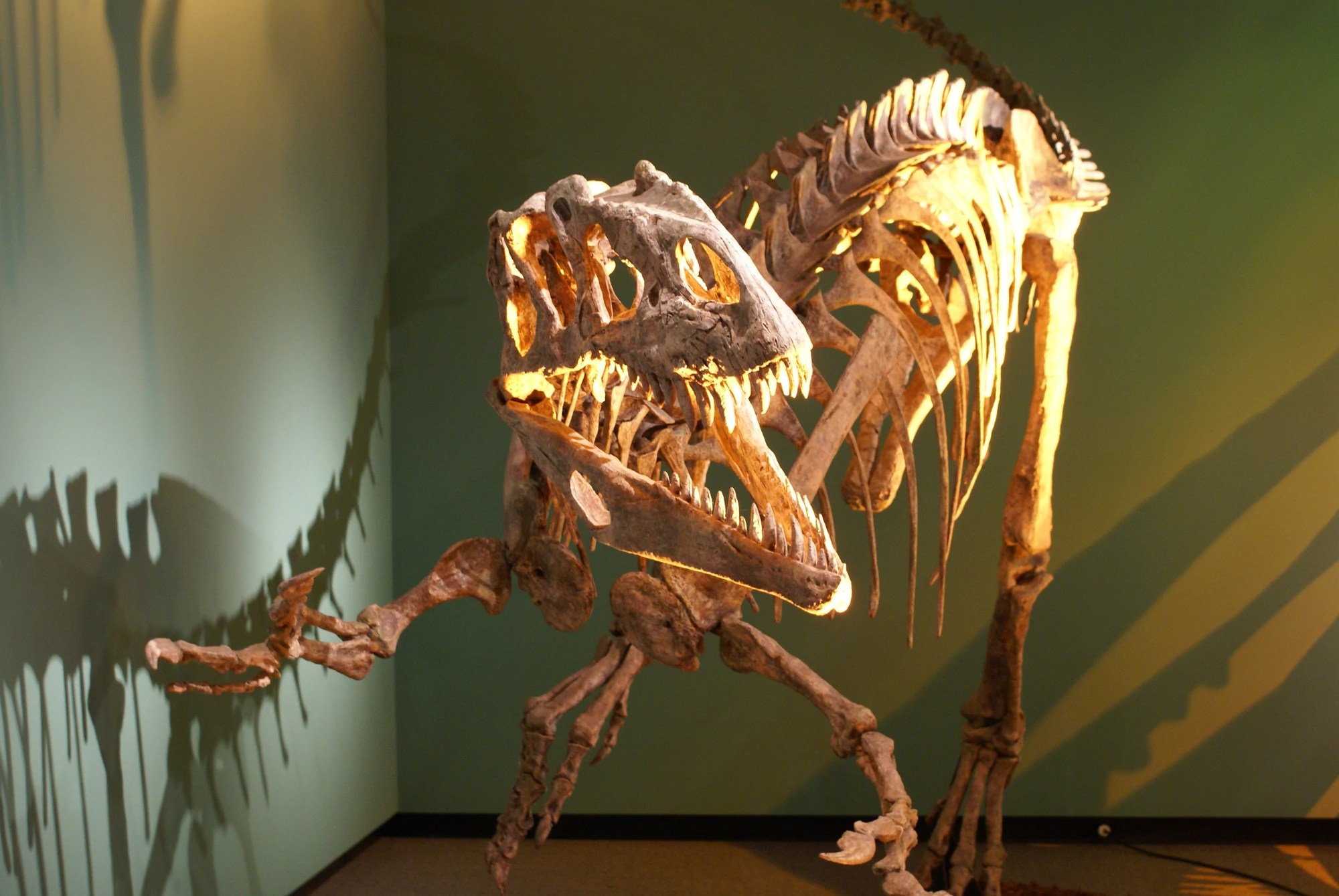 Afrovenator Dinosaur King Fandom Powered By Wikia