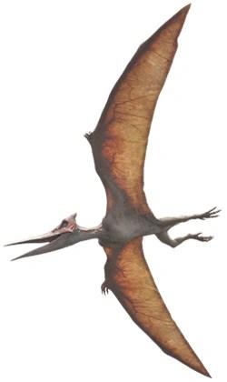 Pteranodon  Jurassic Park Wiki  FANDOM powered by Wikia