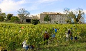 Domaine Plageoles - Vignoble de Gaillac