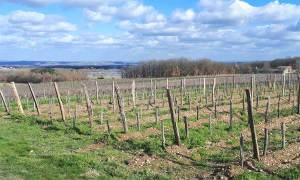Château Plaisance - Vignoble de Fronton
