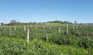 Domaine de Séailles - Vins des Côtes de Gascogne