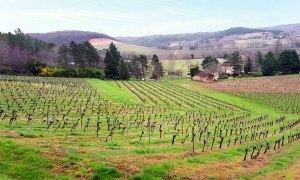 Vignobles Pelvillain - Vin de Cahors