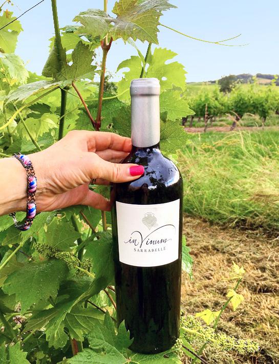 In Vinum, vin d'amphore par Sarrabelle