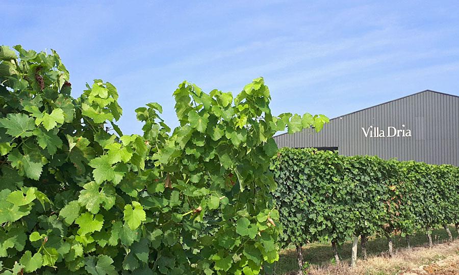 Villa Dria - Vins des Côtes de Gascogne