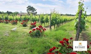 Château Baudare - Vins de Fronton