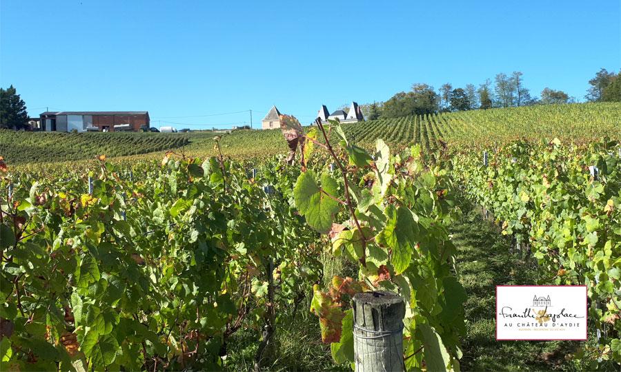 Château d'Aydie - Famille Laplace - Vins de Madiran et Pacherenc-du-Vic-Bilh