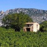 Catalan winegrowers
