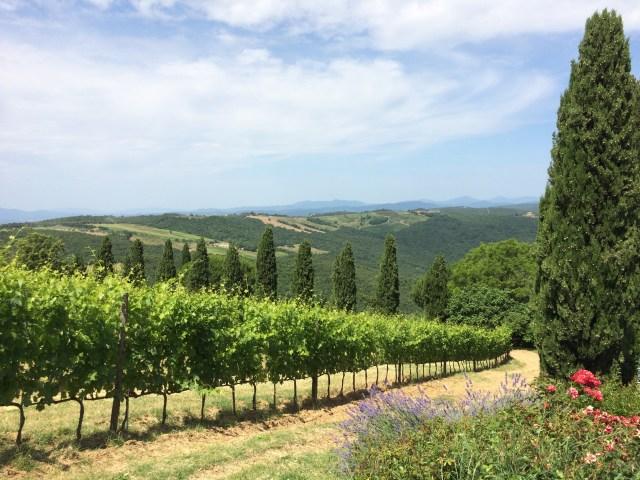 Il Palazzone vineyard