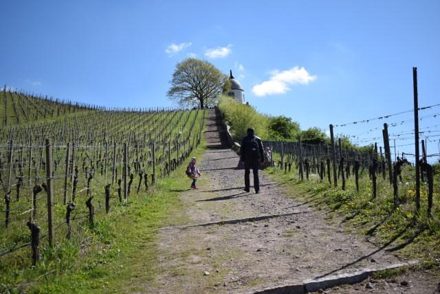 viinivaellus viinialue Sachsen