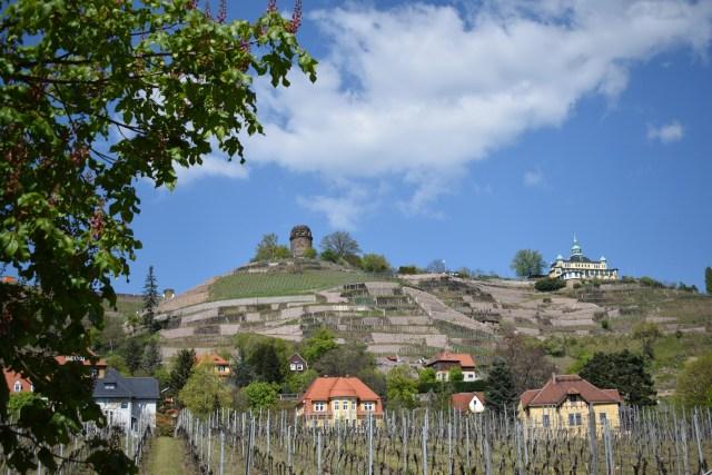 Radebeul viinialue Sachsen