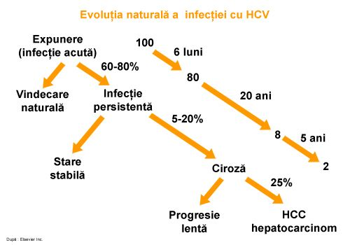 hepatita_c_evolutie