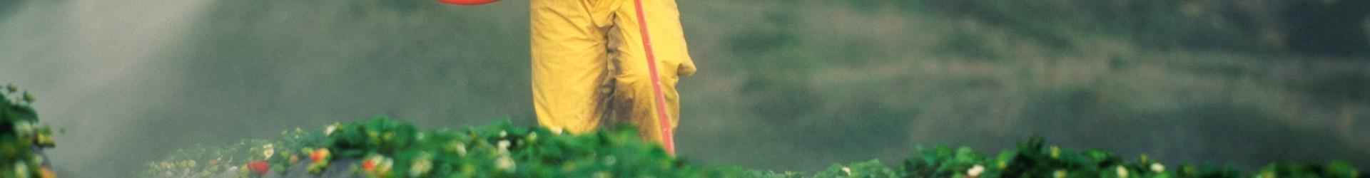 Como diminuir a quantidade de agrotóxicos nos alimentos?