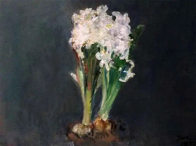 witte-hyacint