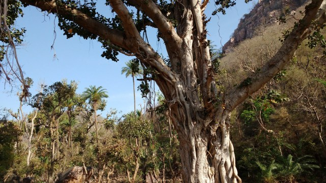 Revival of traditional customs helped conserve trees.