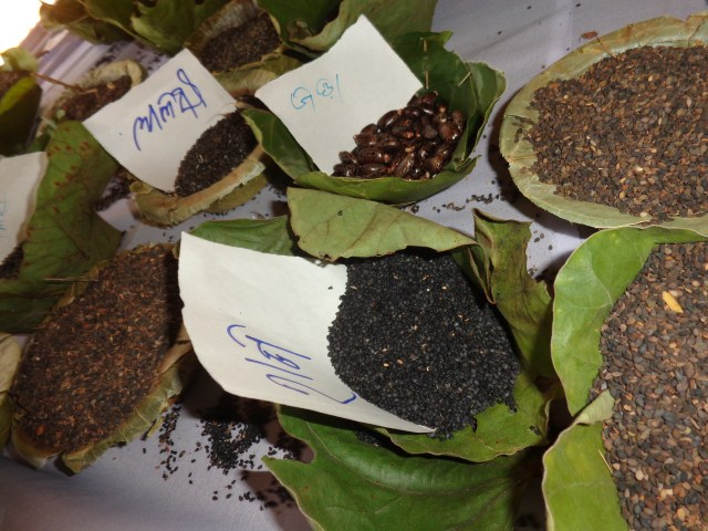 Variety of oilseeds collected from the forest