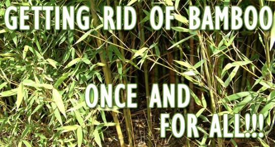 killbamboo