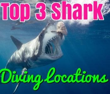 top shark diving locations