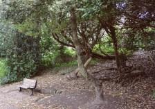Jasmond Dane (a nice Park in Newcastle)