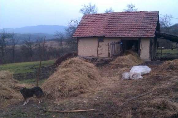Trabajo en granja en Rumania