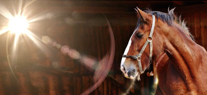 Speciális megvilágítás baromfi, ló, sertés