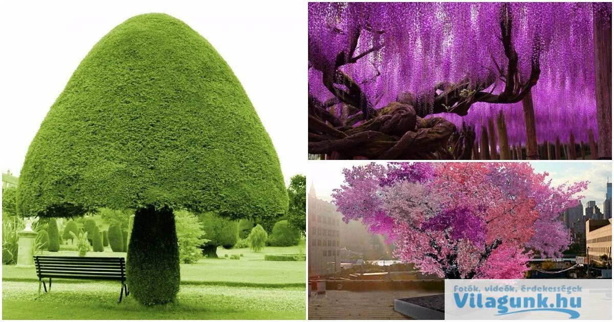 15 legszebb fa a világon ami megmutatja, hogy a természet csodákra képes