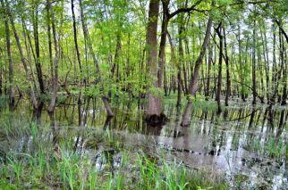 il bosco umido