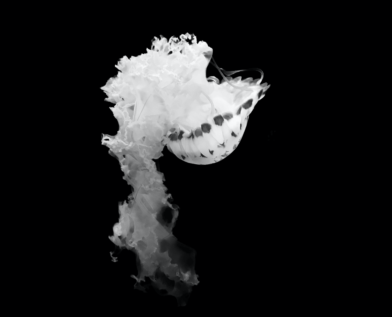 Jellyfis-18-1.png