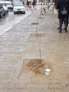 Arbustes plantés le 05-02-2018 ,Ain Oulmène