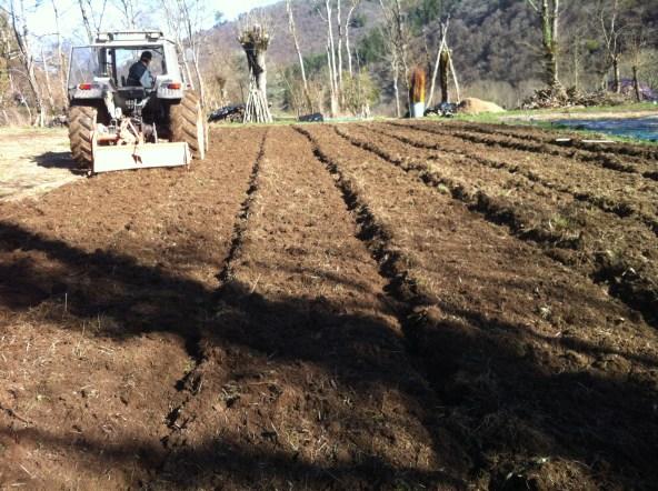 Préparation du sol avec le rotavator