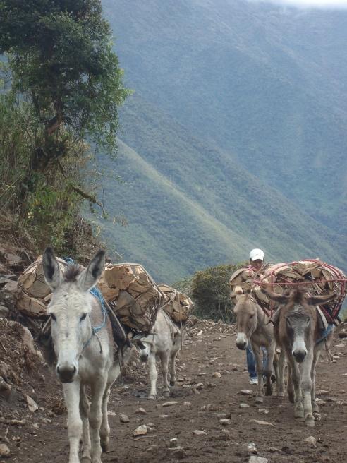 C:\Users\Angela\Pictures\Peru 2012\DSC01050.JPG