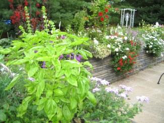 Landscape_Planting_20