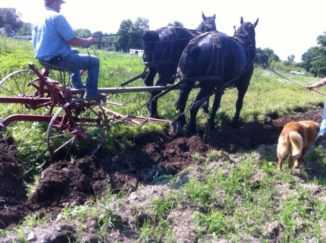 Plowing the old fashioned way