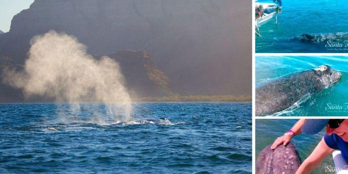 Guía para el Avistamiento de Ballenas en Loreto Baja California
