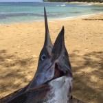 Pesce Spada Las Terrenas - Villa Laura Las Terrenas