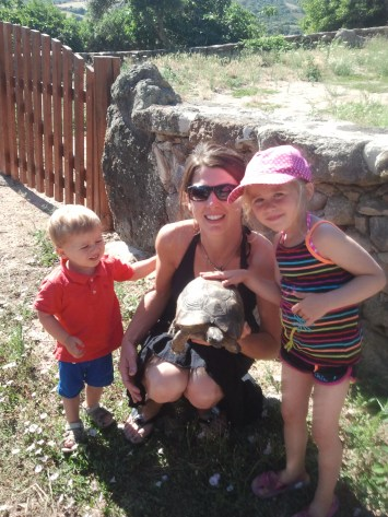 """The biggest tortoise ever seen around here ! This one is a """"testudo marginata"""""""