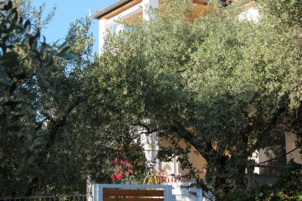 Garden with olive trees around Villa Relax