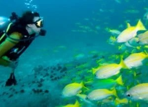 scuba diving adventures hawaii