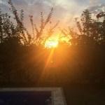 sunset through amapola