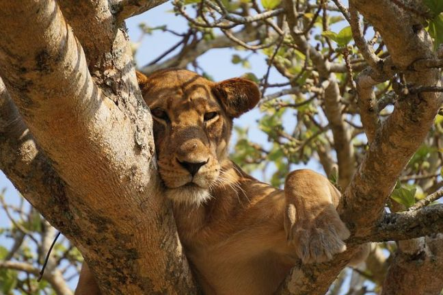 lion-690663__480.jpg