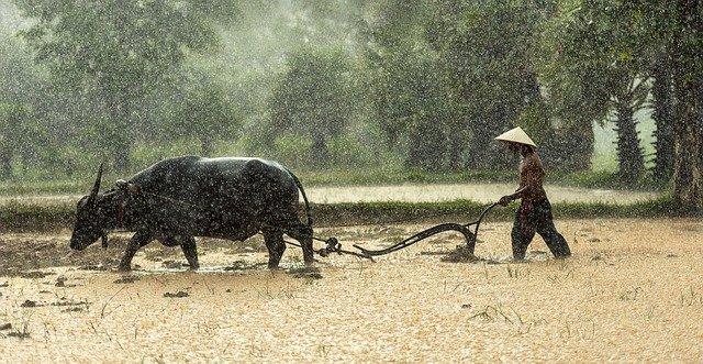 Bonde som plöjer i regnet