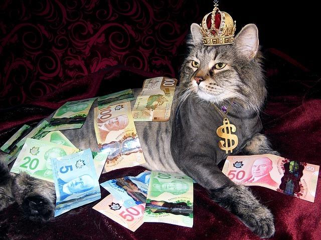 Katt med krona