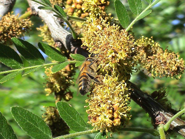 juin 2009 dean abeilles 002