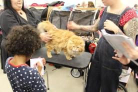 En av deltagarna på kattutställningen.