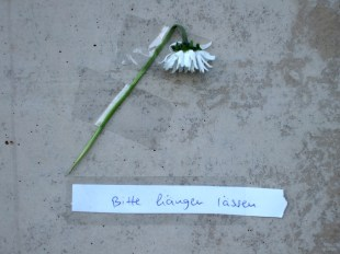 Mauerblümchen im Geschichtspark Moabiter Zellengefängnis