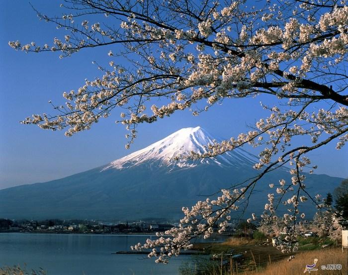 Mount fuji i bakgrunden - studera i japan